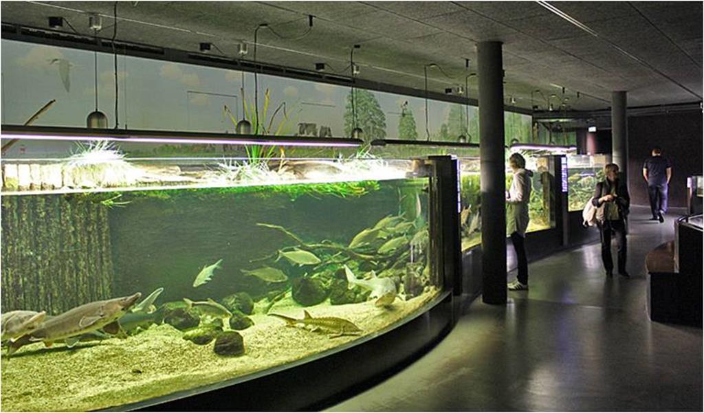 images/phocagallery/konferencja_parki2015/podobne akwarium Copy